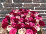 101 flori de la 650 lei oferta de vara