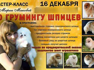 Впервые в Молдове мастер класс по грумингу померанского шпица