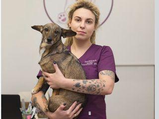 Ветеринарный врач Цвентарная Елена Дмитриевна. клиника zoomama (буюканы)