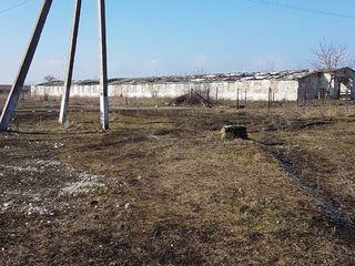 Depozite -grajduri din ferme de beton