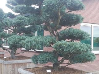 Plante decorative pentru gradina ta.