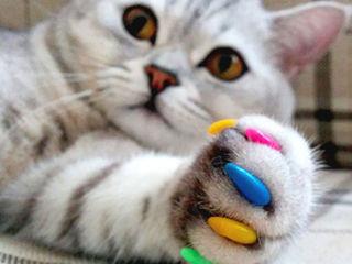 Антицарапки для ваших питомцев! Unghiile false pentru pisici. (complect - de la 50 lei)