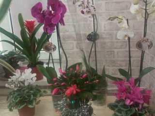 Flori, цветы.