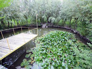 Casă vilă cu bazin și mini lac la 15 minute de oraș