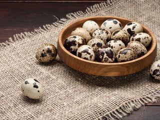 Prepelițe, ouă prepeliță pentru consum și incubare.
