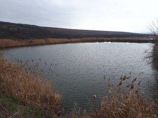 Продается действующий BUSINESS рыболовное хозяйство 16 км от Кишинева ,Страшены-Рошканы