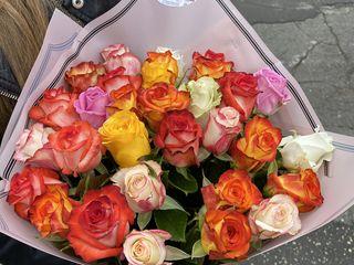 Trandafiri Moldovenesti 101