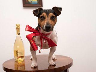 Jack russell terrier super simpatic cauta partenera de viata