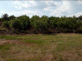 Огороженный 10 летний ореховый сад срочно 1 км от города Бельцы в деревне Цапок