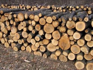 Vindem lemne speci tari Stejar . Frasan. Carpan.