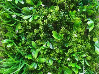 Декоративные зеленые покрытия / Фитостена / Искусственный мох