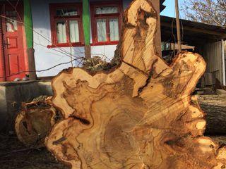 Taierea/defrisarea/aranjarea copacilor, amenajarea coroanei -copacilor