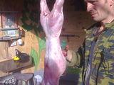 Carne  de iepure   chisinau - botanica  sau anenii-noi 100 lei kg