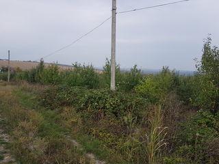 Teren pt Vila,40 ari, intovarasirea pomicola Gutuia Galbena,9km dela Chisinau
