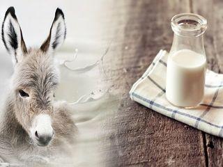 Ослиное молоко / молоко ослиц / lapte de magarita. Product de calitate si ecologic curata!