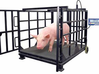 Скидки! Весы для взвешивания животных. Alex S&E