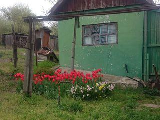 Старый дом в Новых Аненах, с.Албиница