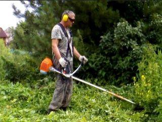 Curatare pomi, taiere copaci,alpinism utilitar, cu Stihl