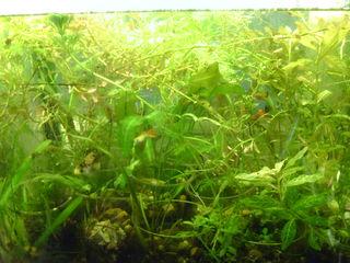 Набор для начинающего аквариума