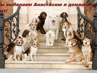 Домашняя гостиница для животных!
