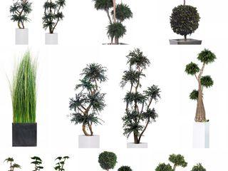 Стабилизированные растения и деревья в вашем интерьере !!! plante stabilizate pentru interiorul dvs.