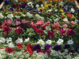 Садовые цветочки!!