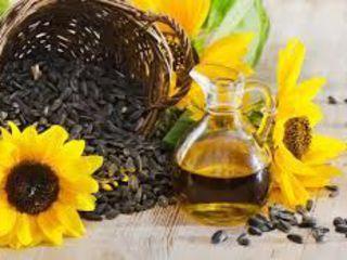 vind 500 kg floarea soarelui-8 lei/kg-p/u ulei