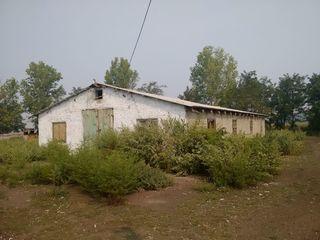 Teren si Constructii cu destinatie cresterea animalelor, Glodeni, satul Sturzovca