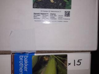Legume porumb super dulce seminte profesionale de la importatorul exclusiv preturi foarte bune