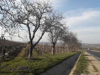 Se vinde lot de teren amplasat pe traseul Chisinau-Hincesti