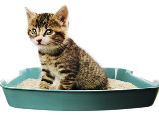 Наполнители для кошек с доставкой по Кишиневу !!!