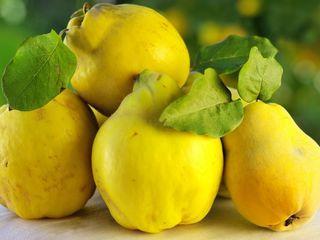 Pomi fructiferi - pomi de gutui soiul Codreanca , Auriu ș.a.