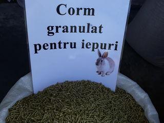 Hrana granulată direct de la producător pentru: Iepuri,pui,găini,prepelițe și alt...