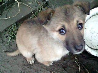 Подарим спасенных щенят надежным людям!