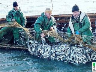 Рыболовные сети на заказ(есть готовые) .а также садки полки... невода бредни фатки