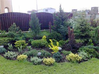 Plante decorative vesnic verzi si frunza cazatoare de la producator din Tohatin.