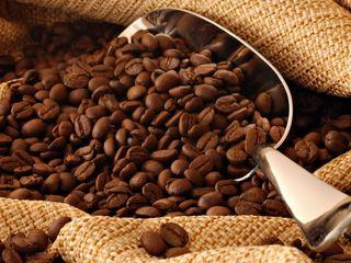 Cafea angro (кофе оптом)
