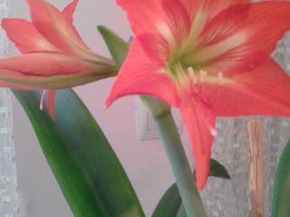 Vind floare de camera