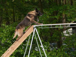 Dresaj canin, дресировка собак