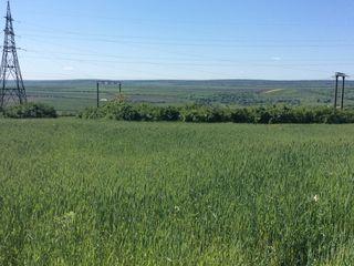 Большой участок частной земли  в Оргееве