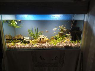 Прадом аквариум с рыбками с филитрам с грунтам с обогревателем и с декорам обём где-то 220 или 240 л