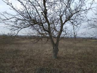 Участок под строительство 30 км от Кишинева