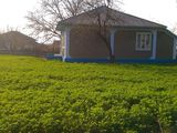 Vind gospodarie buna (sau schimb pe auto) in satul Blesteni raionul Edinet , 13km de la Edinet!!!