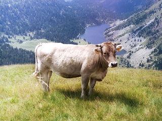 Abator:cumpara animale in toata Moldova.