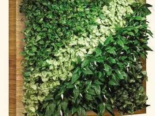 Green wall. Gradini verticale. Вертикальные сады