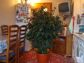 Комнатные декоративные цветы