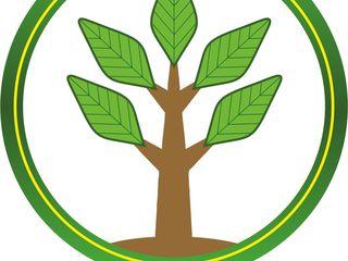 Planificarea  Inițierea  Contabilitate Dezvoltarea afacerii management financiar  www.ramuracinci.md