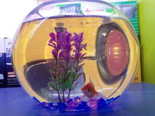Продам - круглые аквариумы с рыбкой