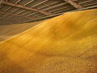 Porumb (кукуруза) - 3.25lei (tva,ндс)