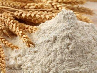 Продам пшеничную муку высшего сорта из Египта